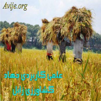 علمی کاربردی جهاد کشاورزی سیستان و بلوچستان (زابل)