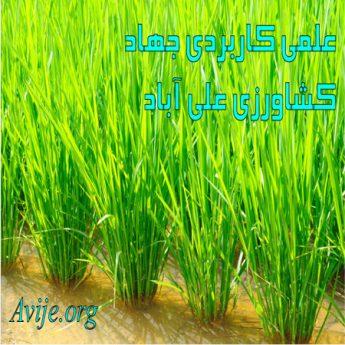 علمی کاربردی جهاد کشاورزی فارس (علی آباد)