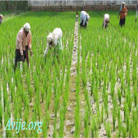 ثبت نام رشته امور زراعی علمی کاربردی