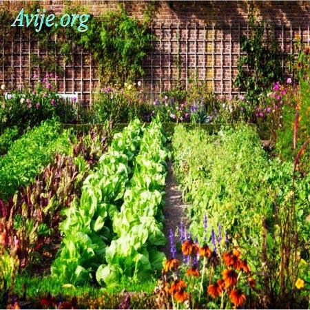 ثبت نام رشته باغبانی علمی کاربردی