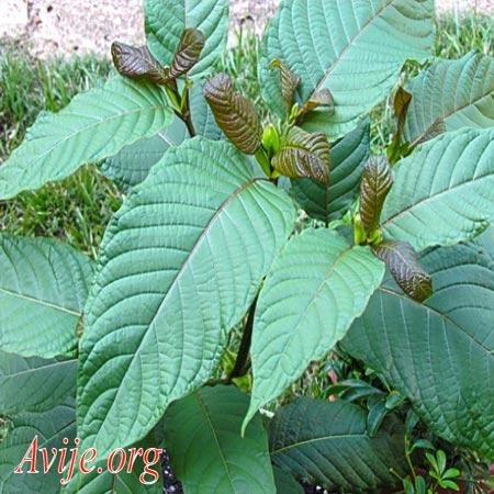 ثبت نام رشته گیاه پزشکی علمی کاربردی