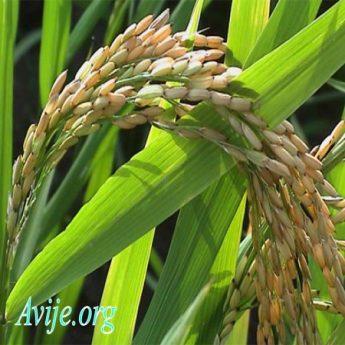 رشته امور زراعی علمی کاربردی بدون کنکور